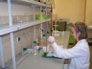 Oznaczanie zawartości witaminy C w tabletkach
